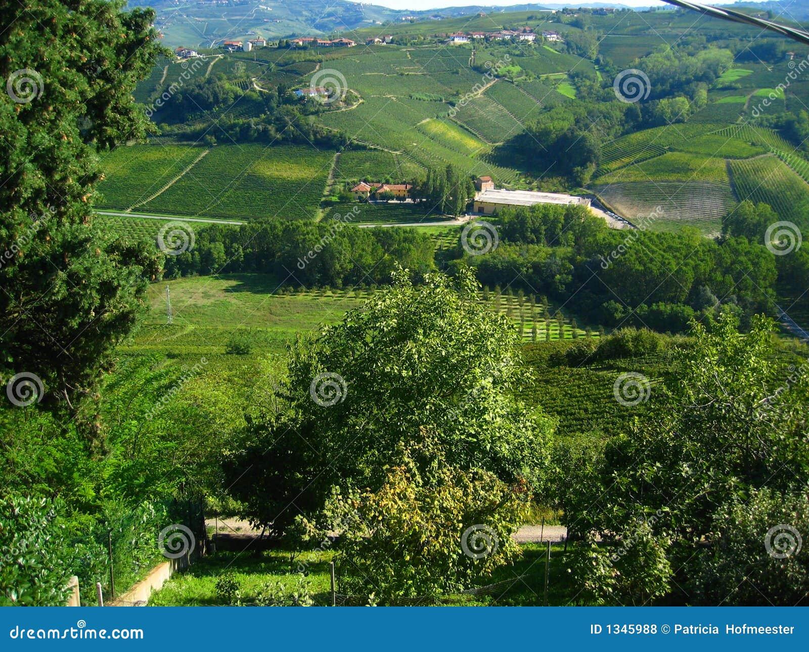 Härliga italienska vingårdar