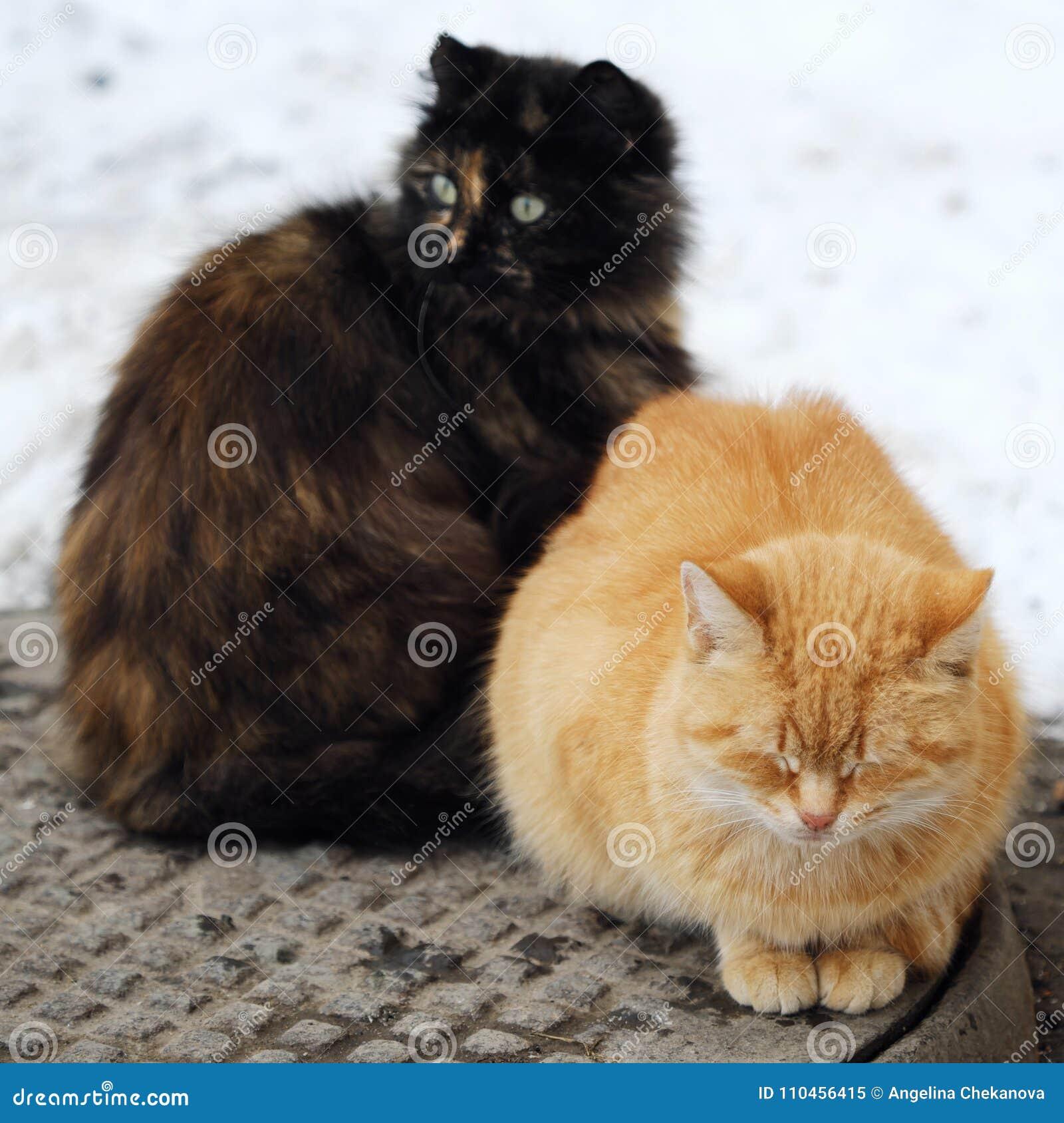 Härliga katter svärtar och rävaktig färg på gatan i vinter