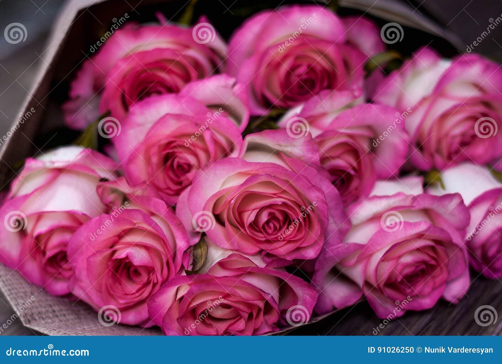 Härliga nya rosa rosor