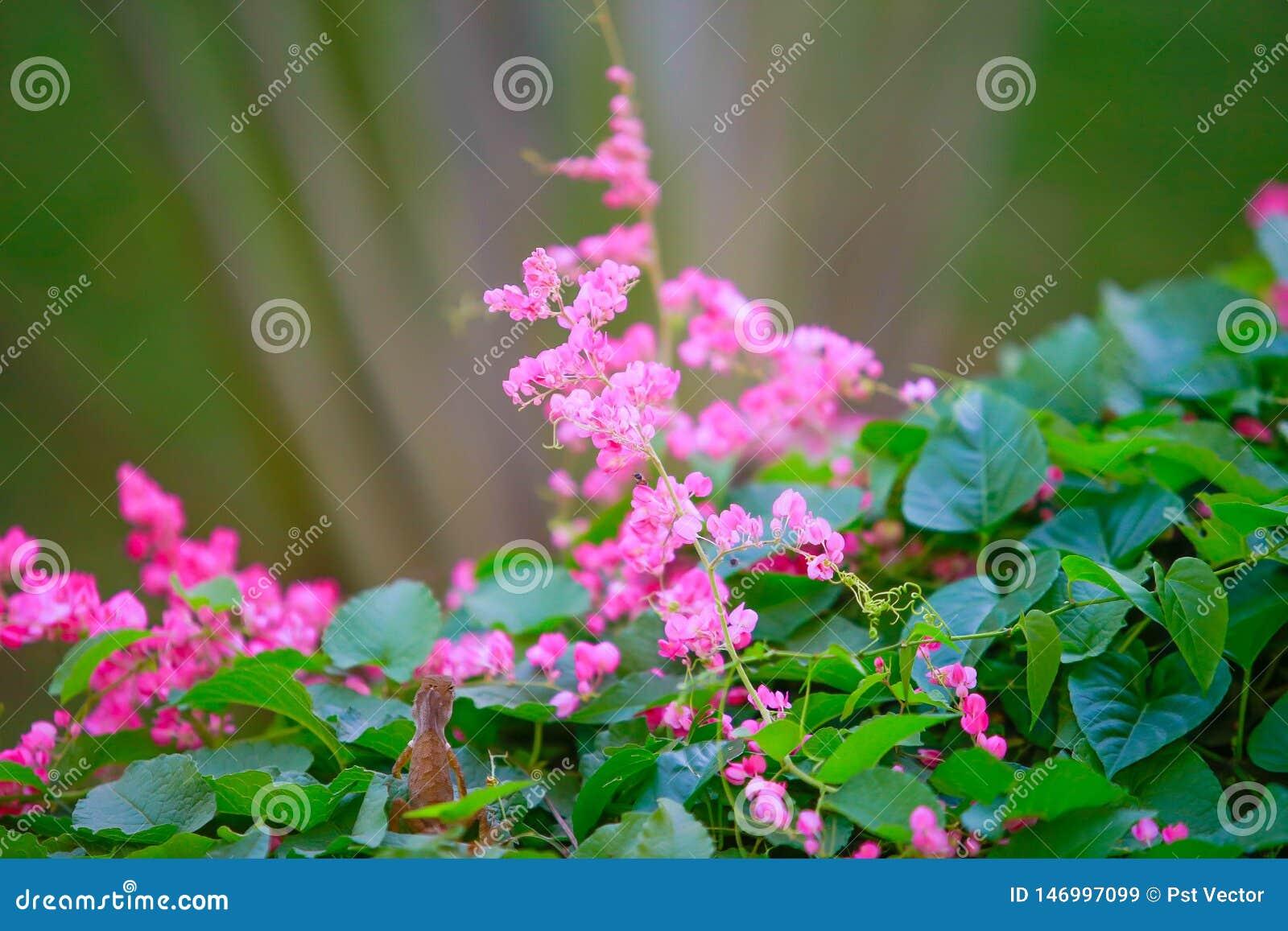 Härliga rosa blommor och kameleontdjur i trädgård med naturlig grön bakgrund