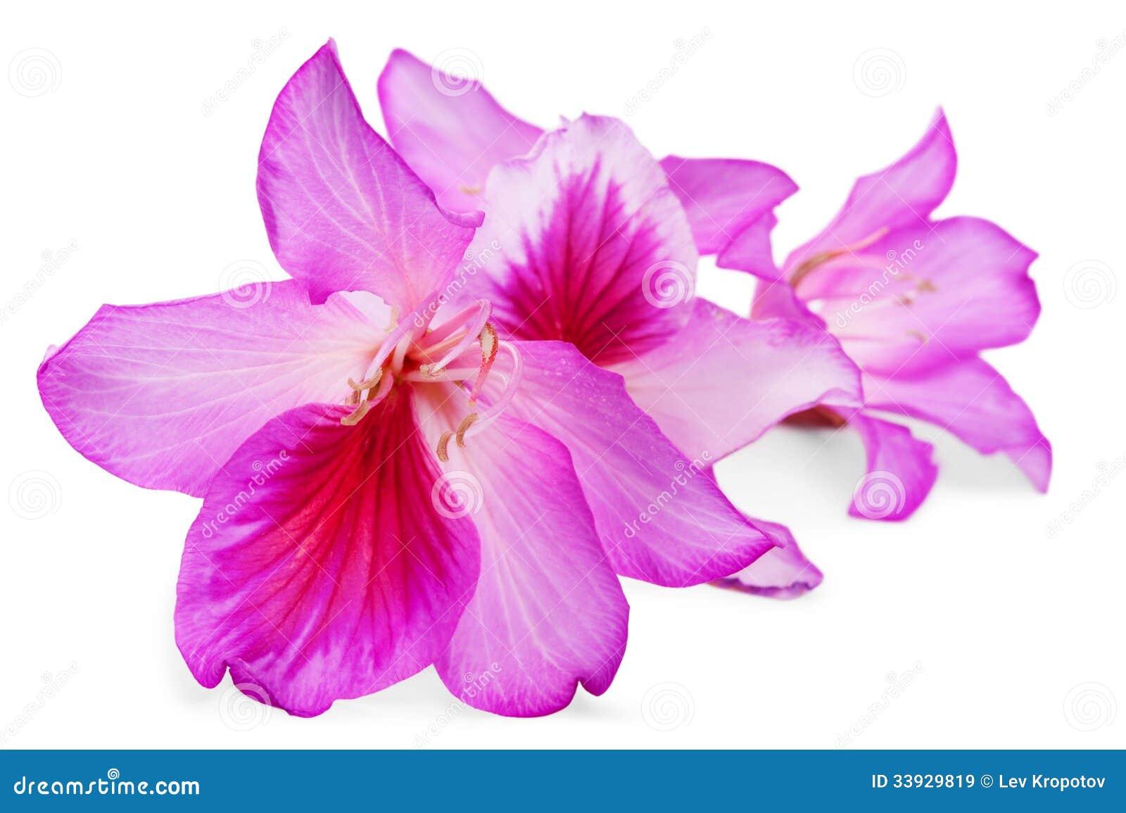 Härliga rosa färgblommor