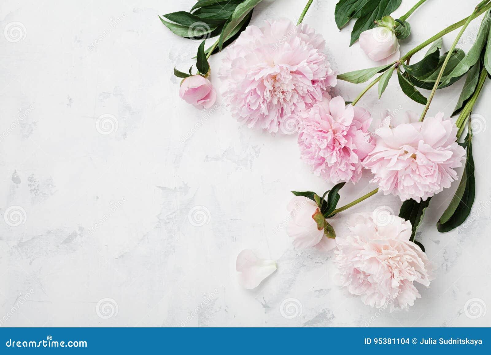 Härliga rosa pionblommor på den vita tabellen med kopieringsutrymme för din sikt och lägenhet för text bästa lägger stil