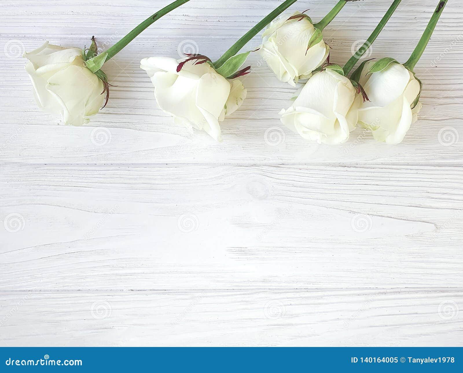 Härliga rosor blomstrar hälsa den romantiska gränsen på den vita träbakgrundsramen