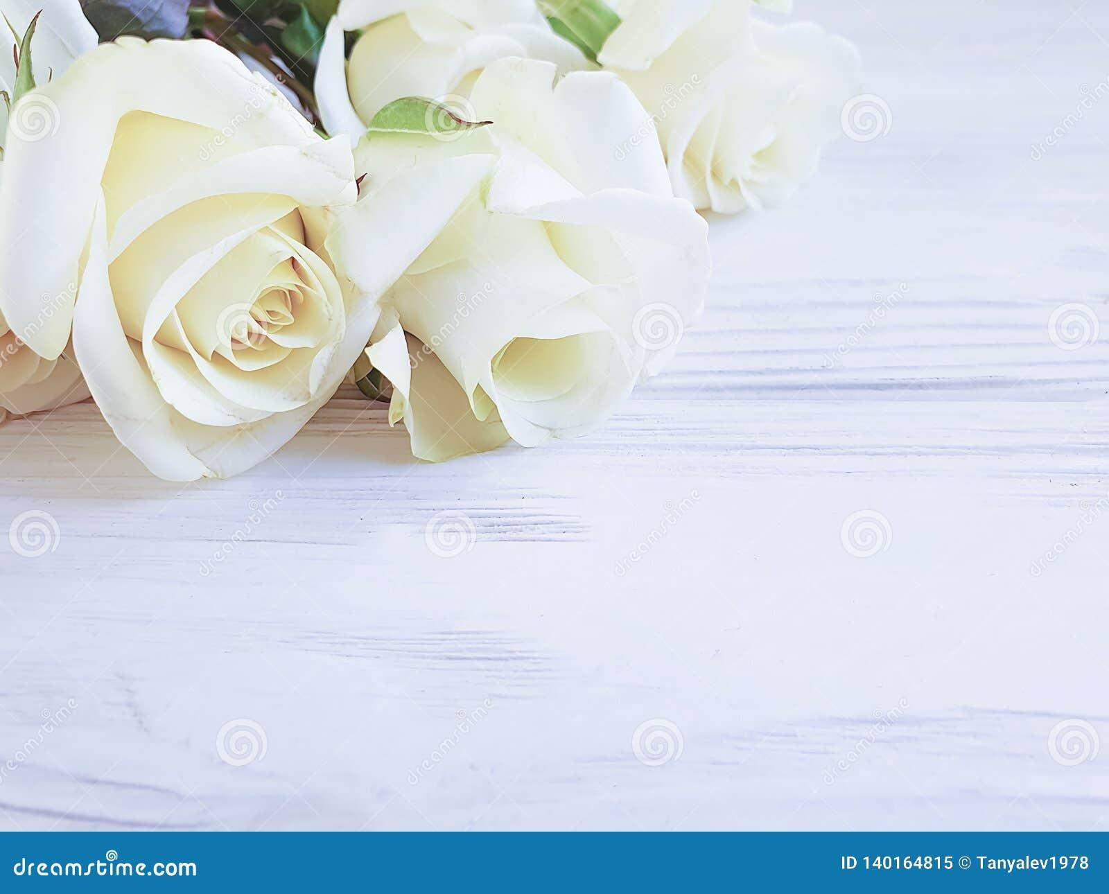 Härliga rosor på den vita träbakgrundsramen