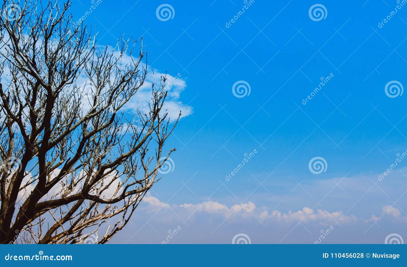 Härliga trädfilialer mot blå himmel med moln med kopia s