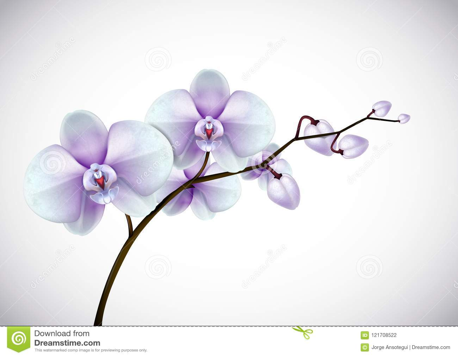 Härliga tre - vita för dag blommar gamla och purpurfärgade orkidér i kli