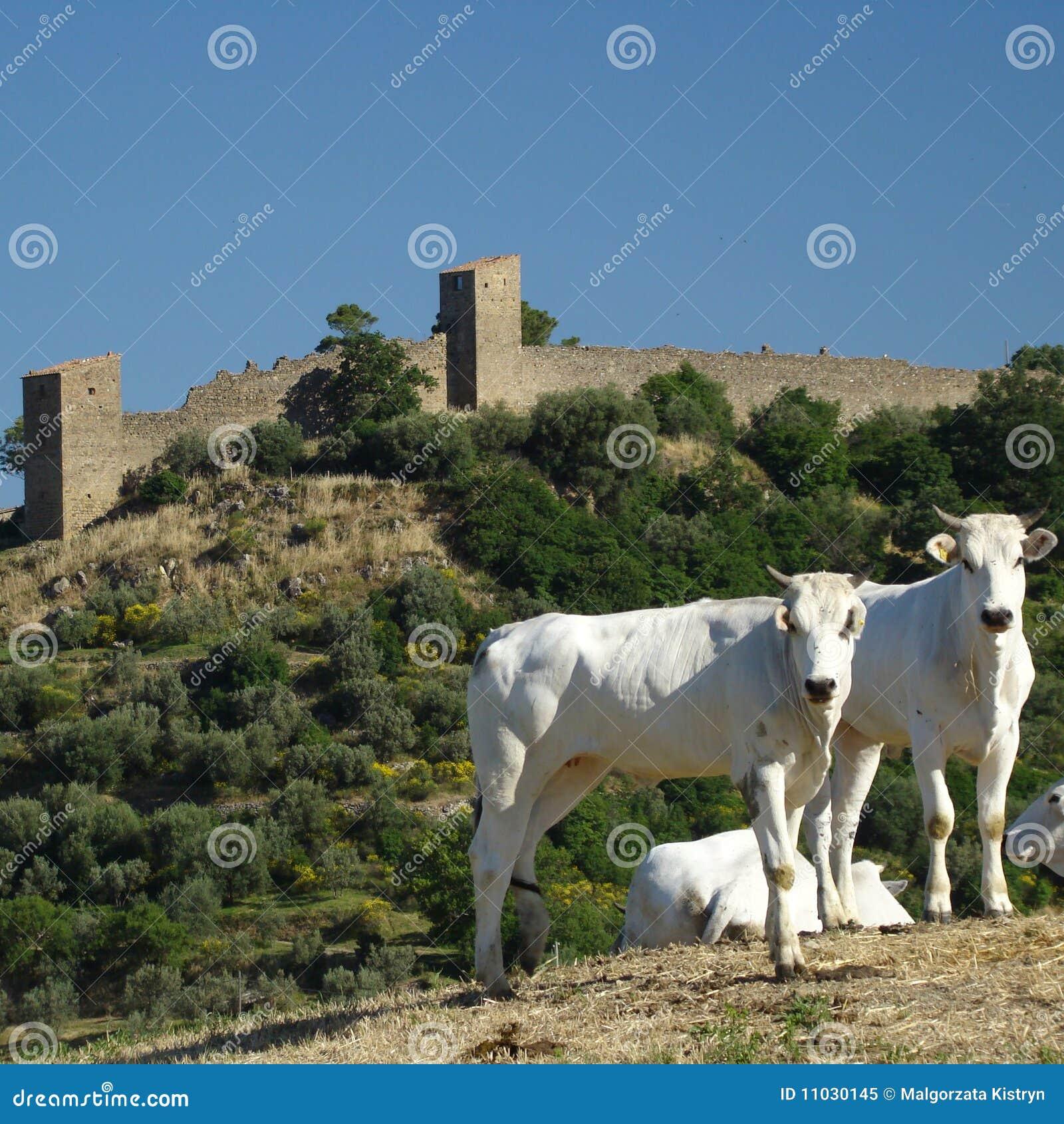 Härliga tuscany
