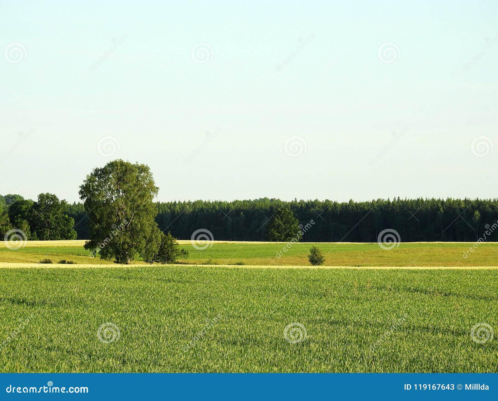 Härligt fält i sommar, Litauen