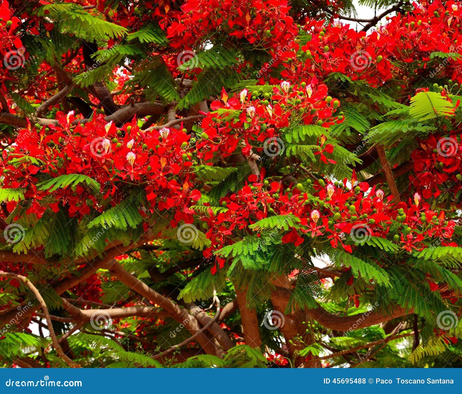 träd med röda blommor