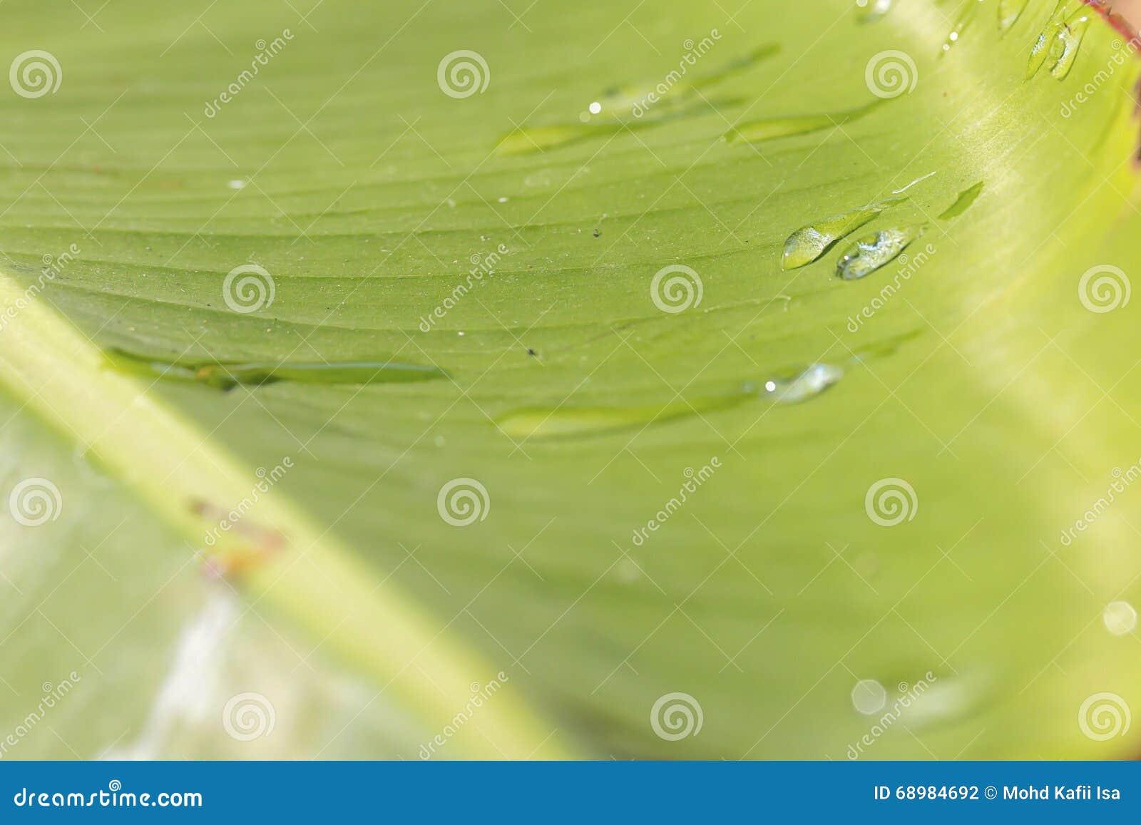 Härligt grönt landskap i Putrajaya Malaysia