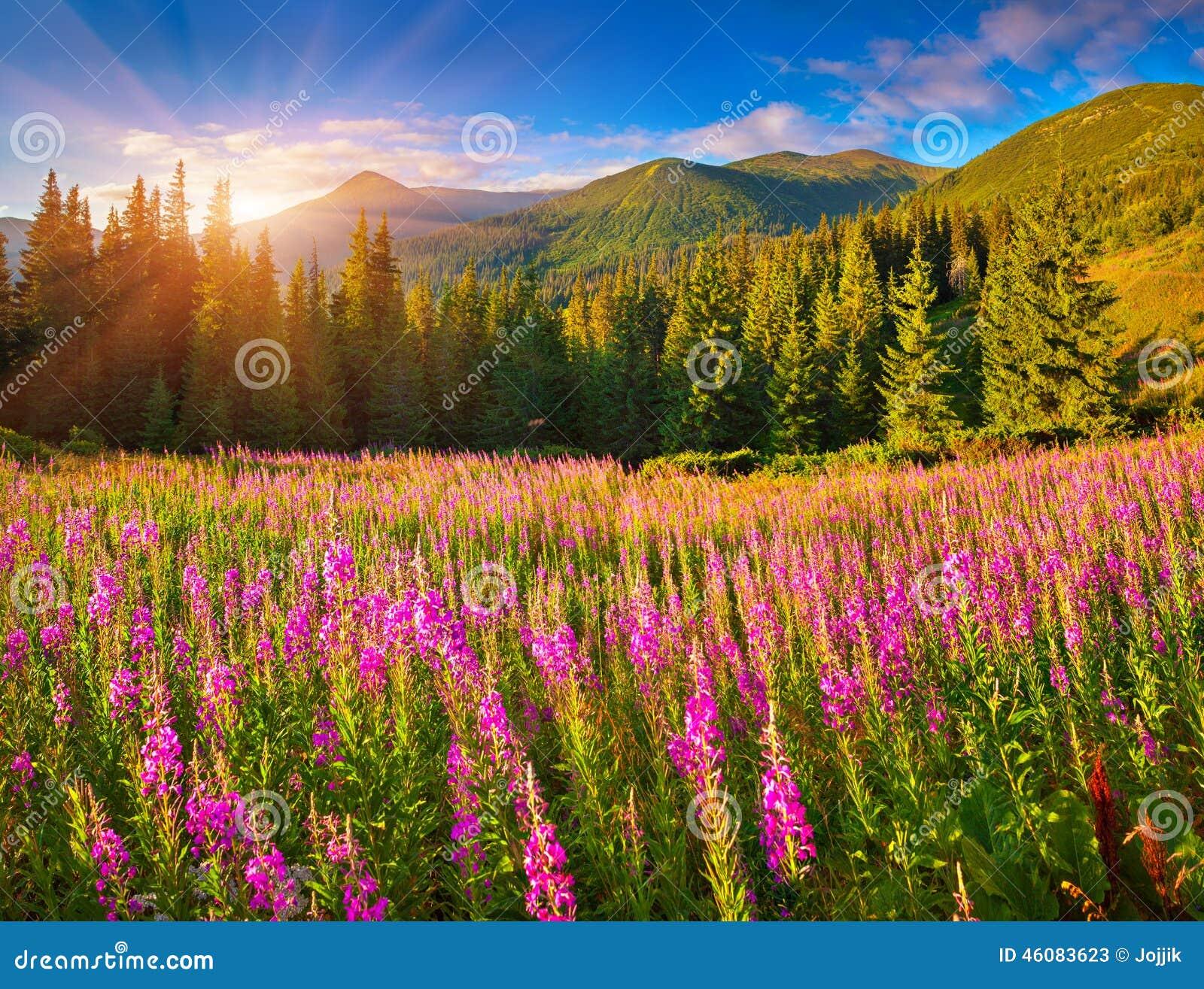 Härligt höstlandskap i berg med rosa blommor