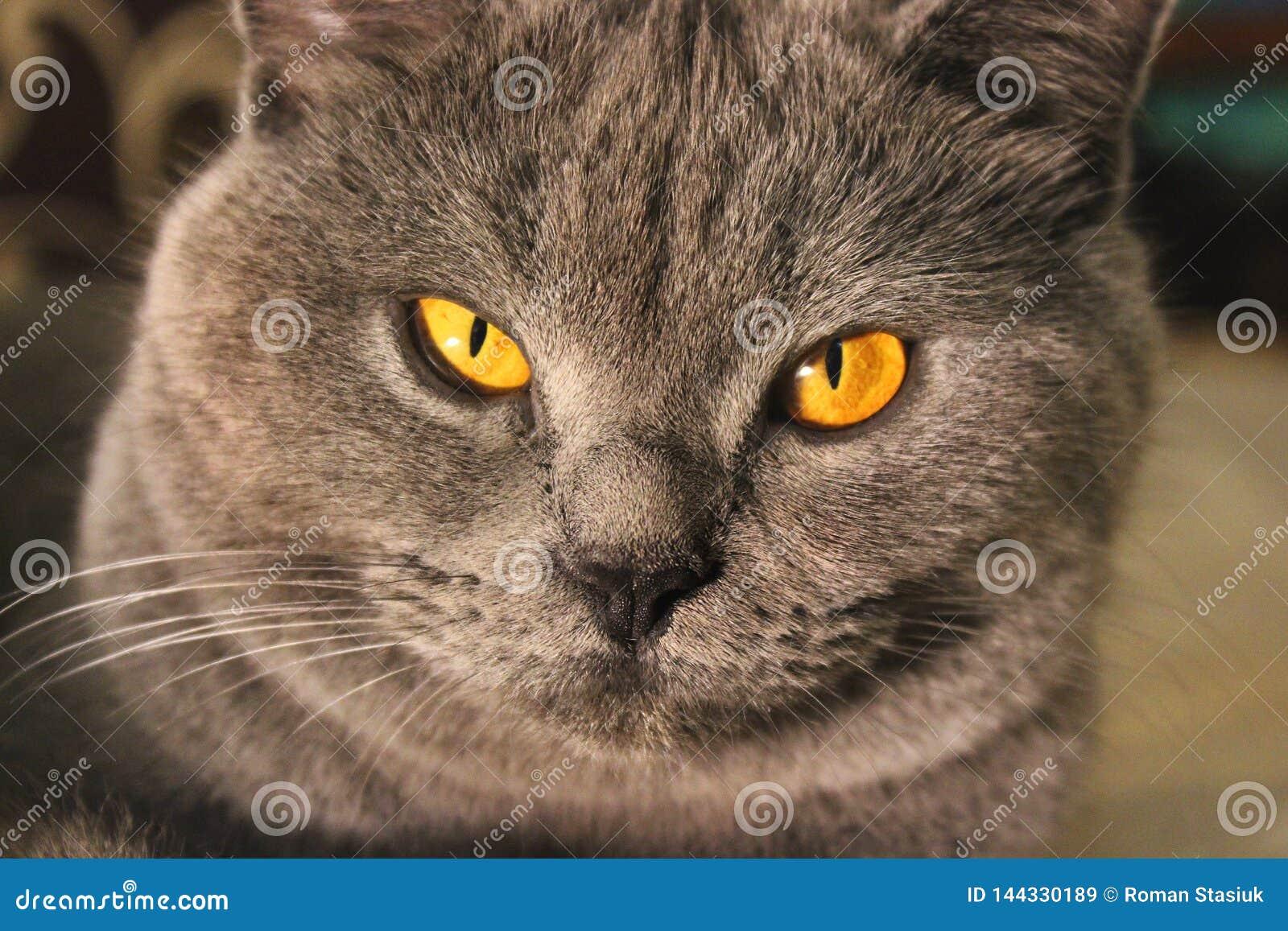 Härligt kattslut upp