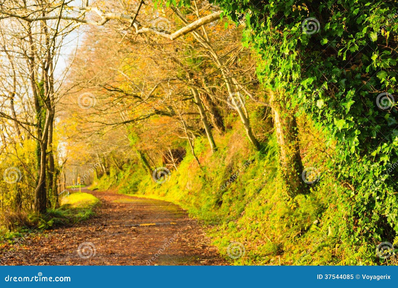 Härligt landskap. Autumn Pathway gränd Co.Cork, Irland.