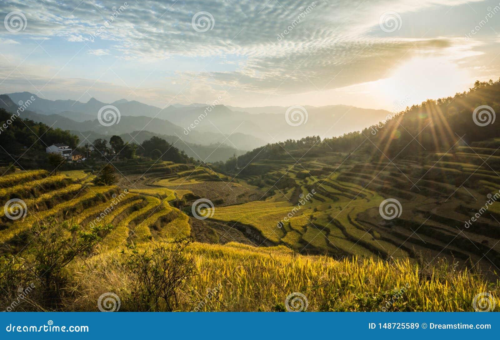 Härligt landskap av risterrasser i Kina