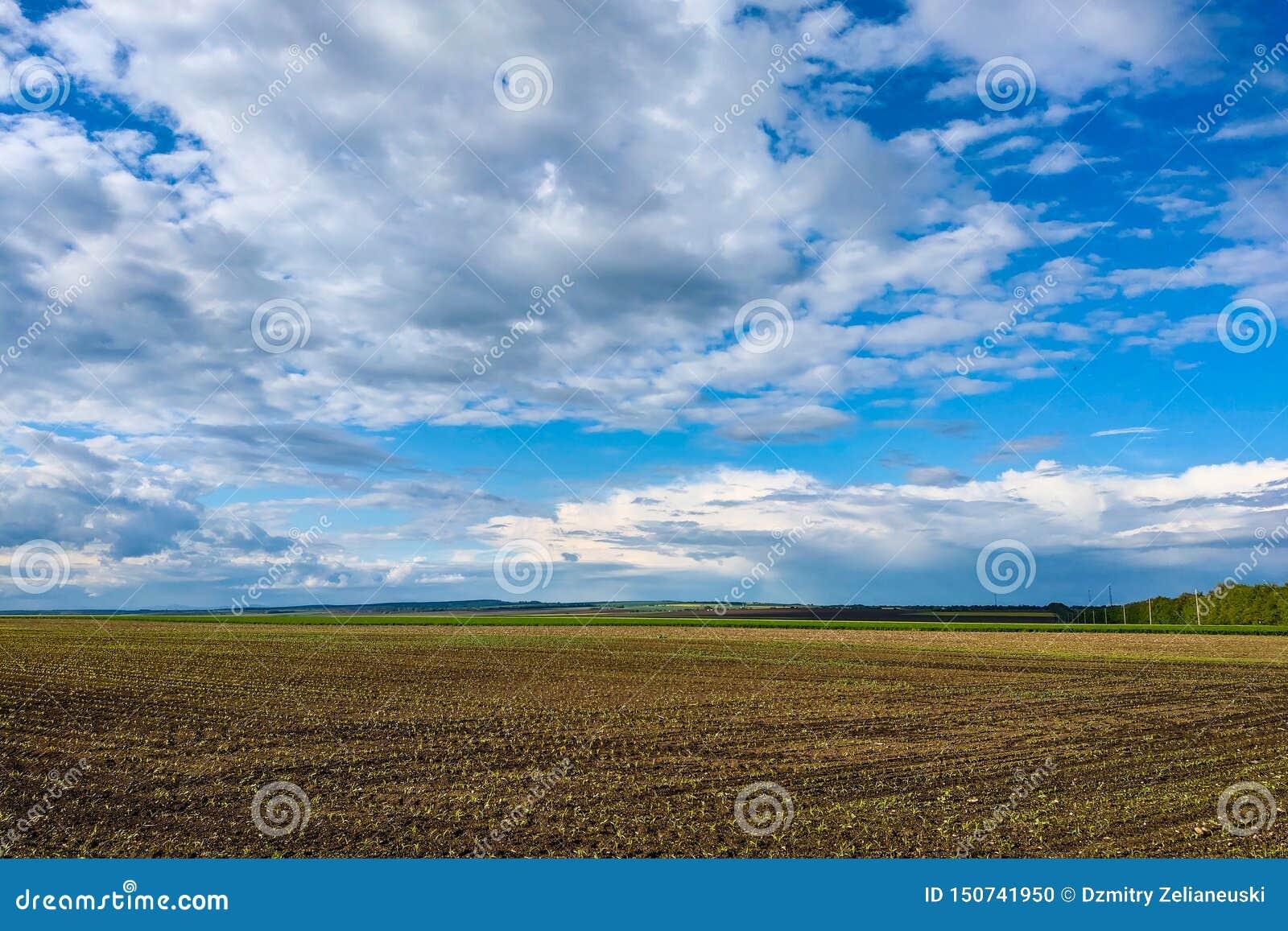 Härligt landskap med det gröna fältet och stora vita moln