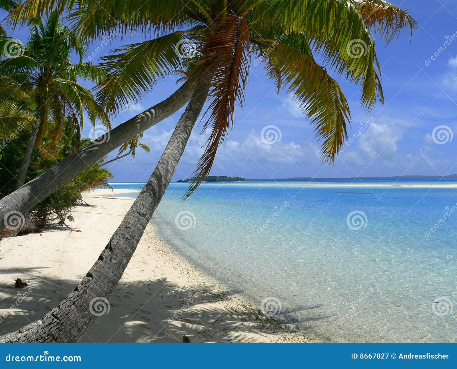Härligt tropiskt för strand