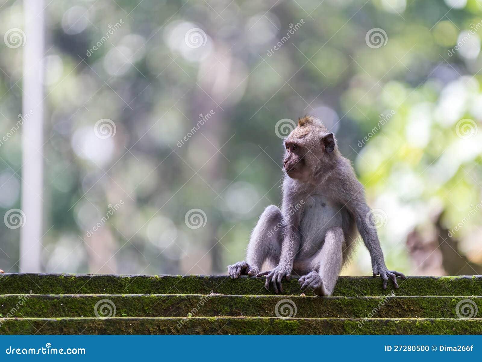 Härma att sitta på moment i den Ubud skogen, Bali