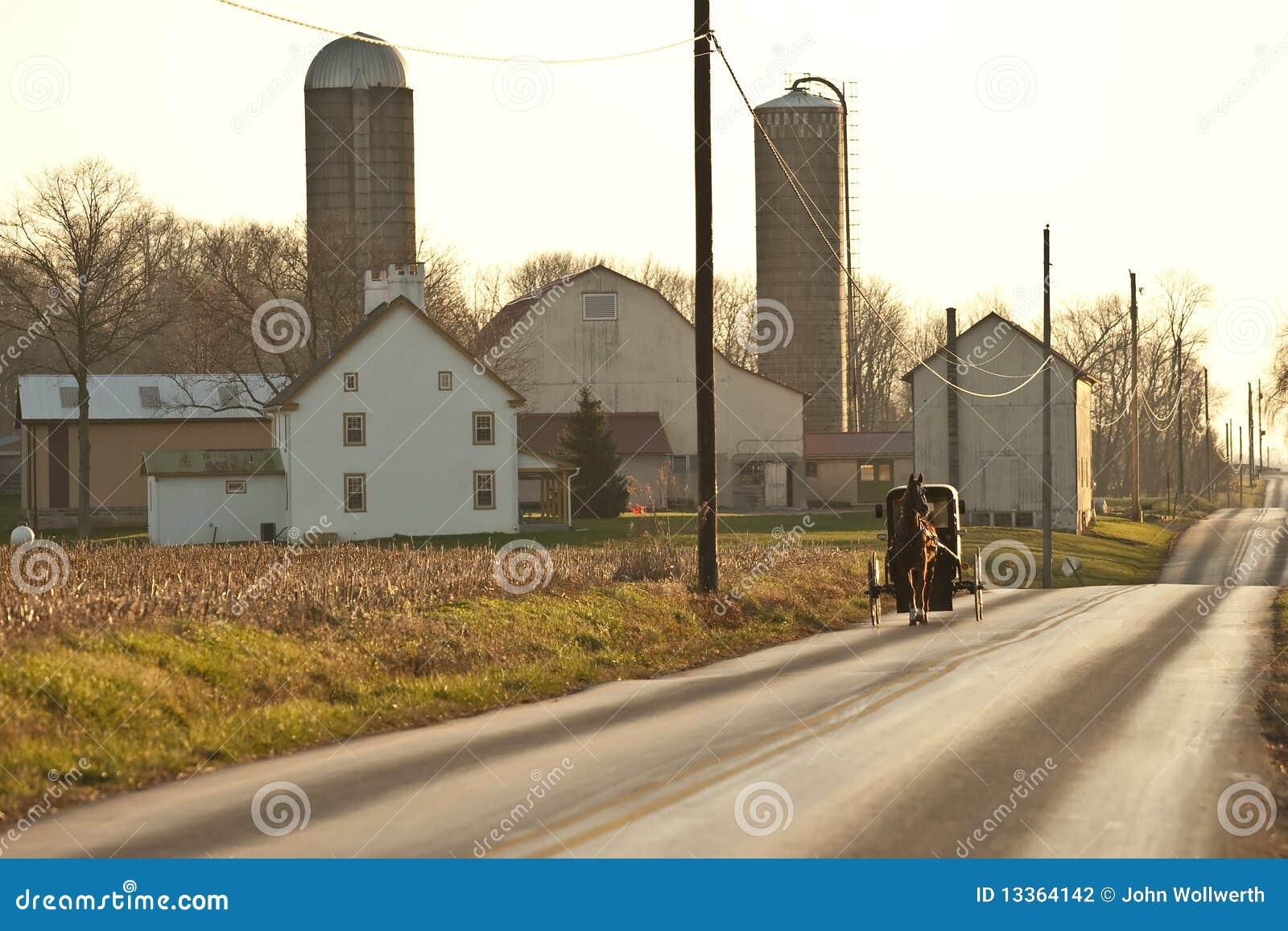 Häst för amish vagnslantgård