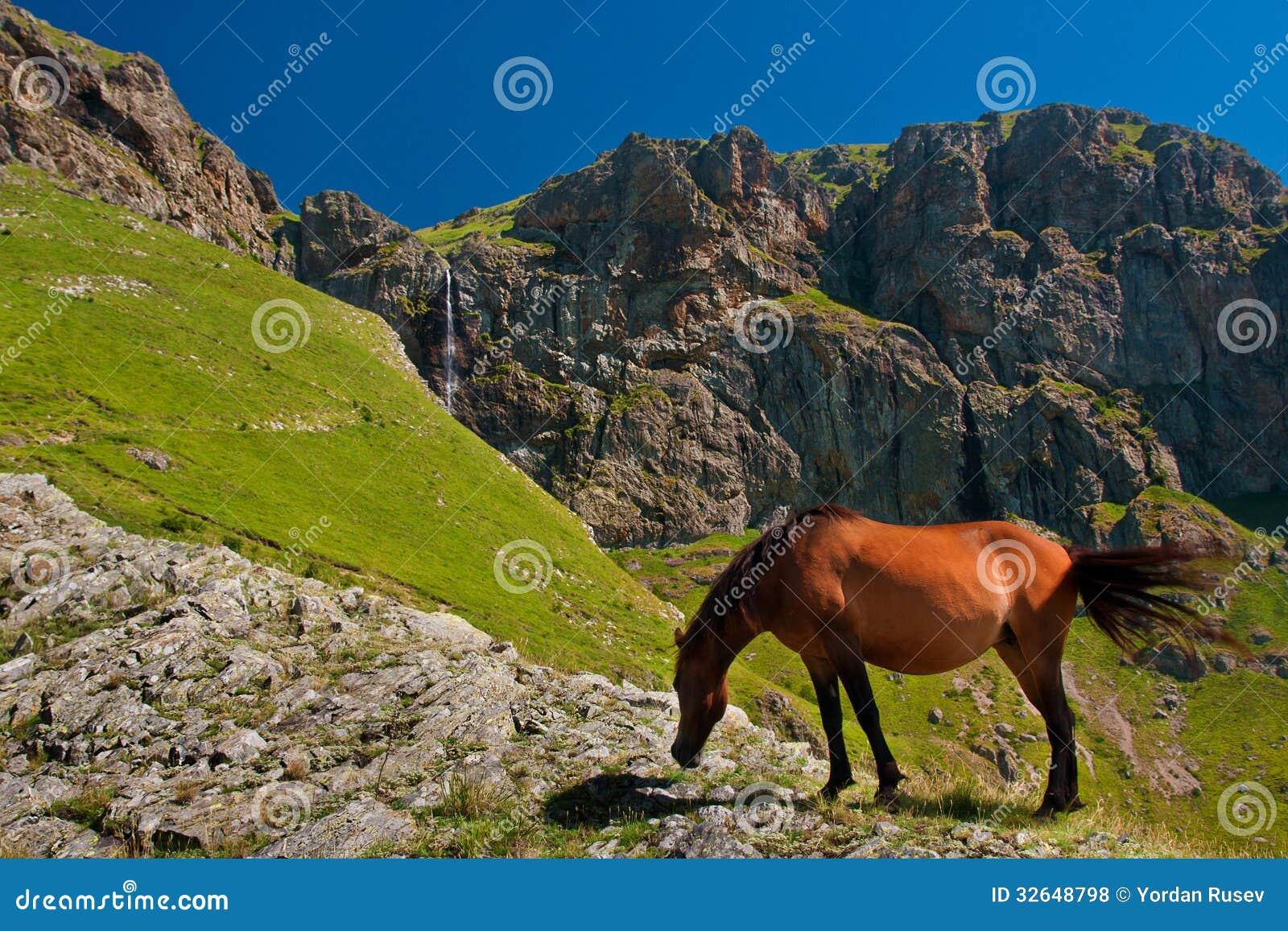 Häst framme av bergvattenfallet