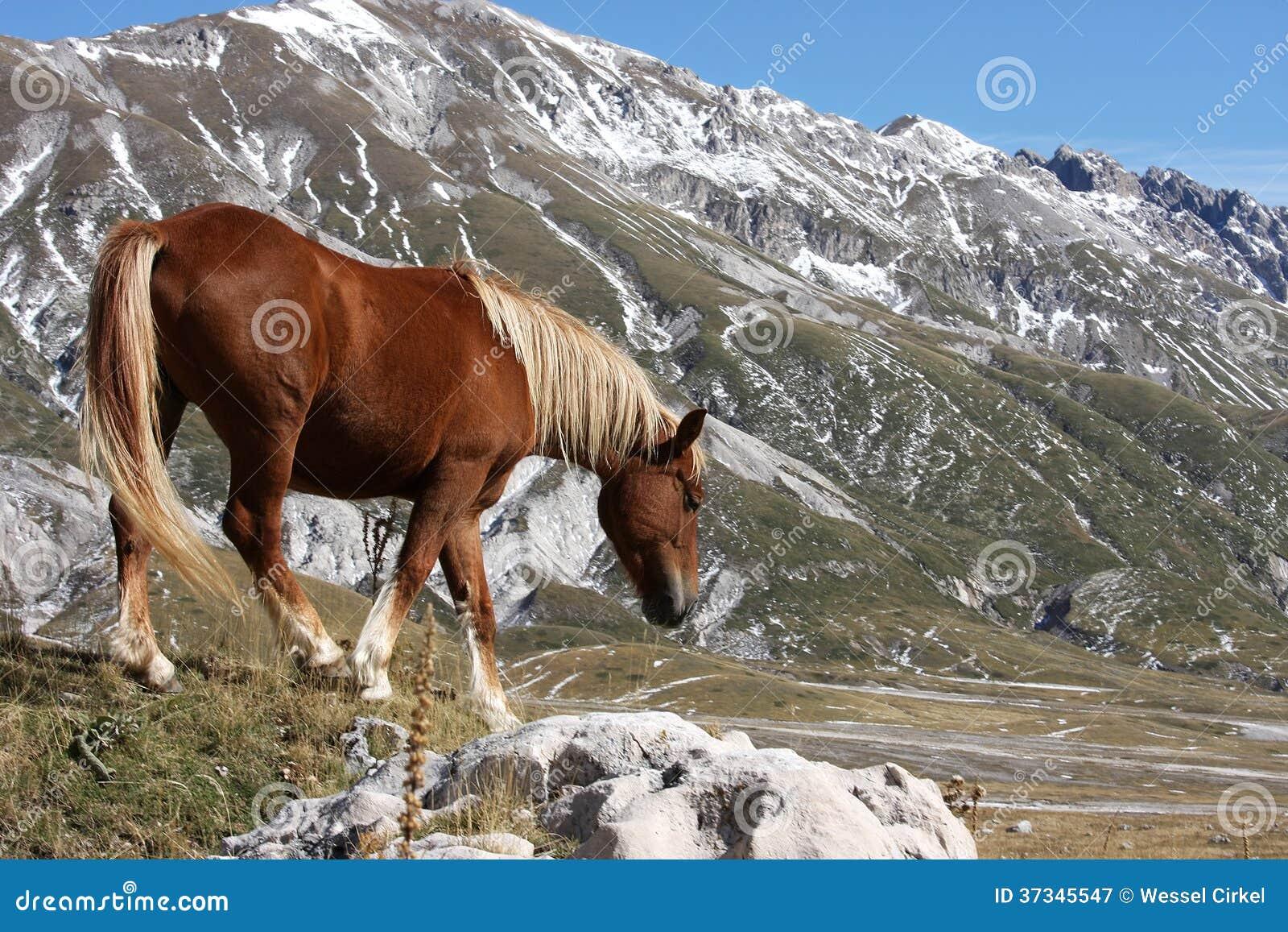 Häst i den fria naturen, Abruzzo, Italien