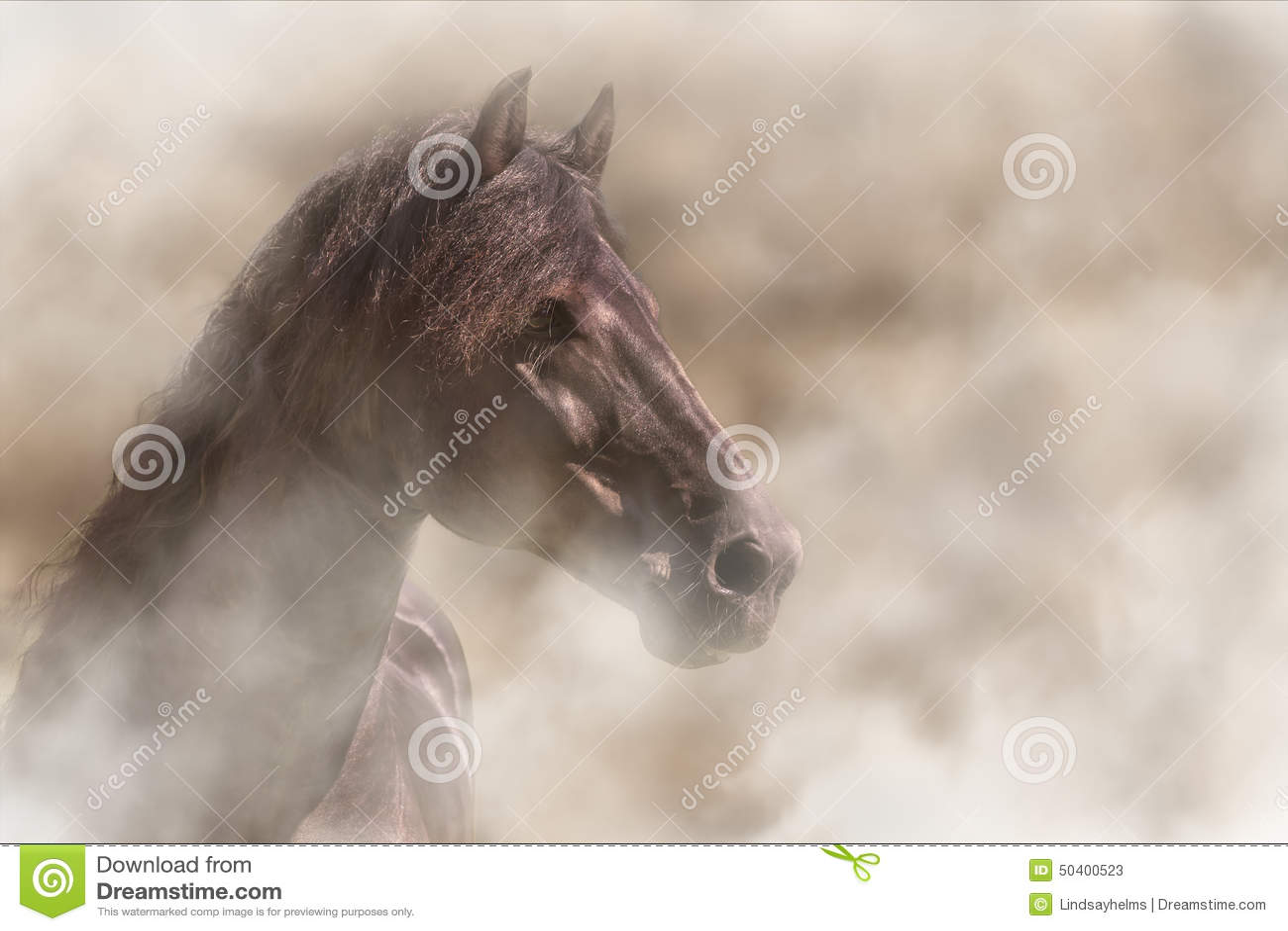 Häst i dimma