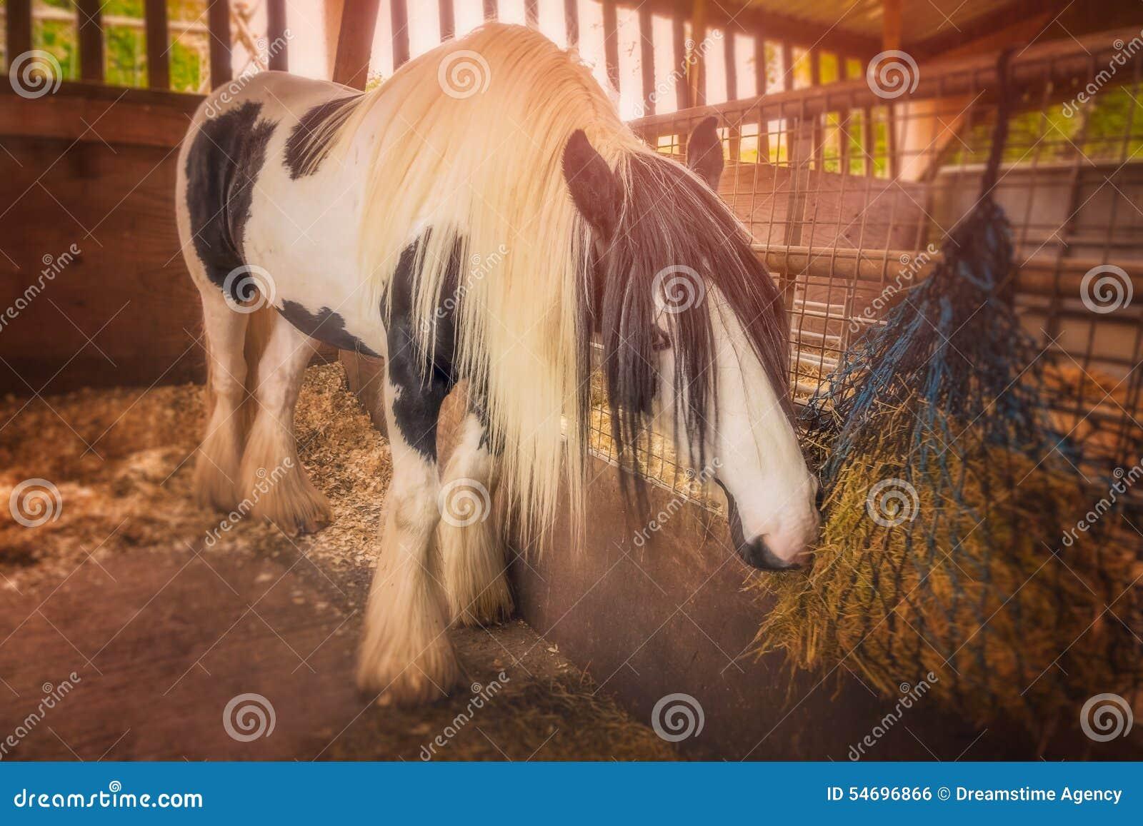 Häst i ett stall