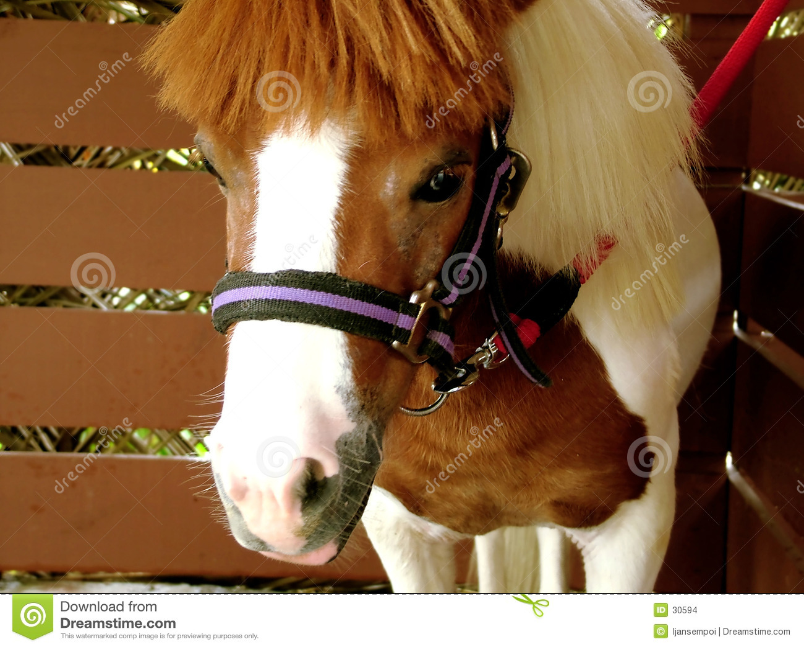 Häst little