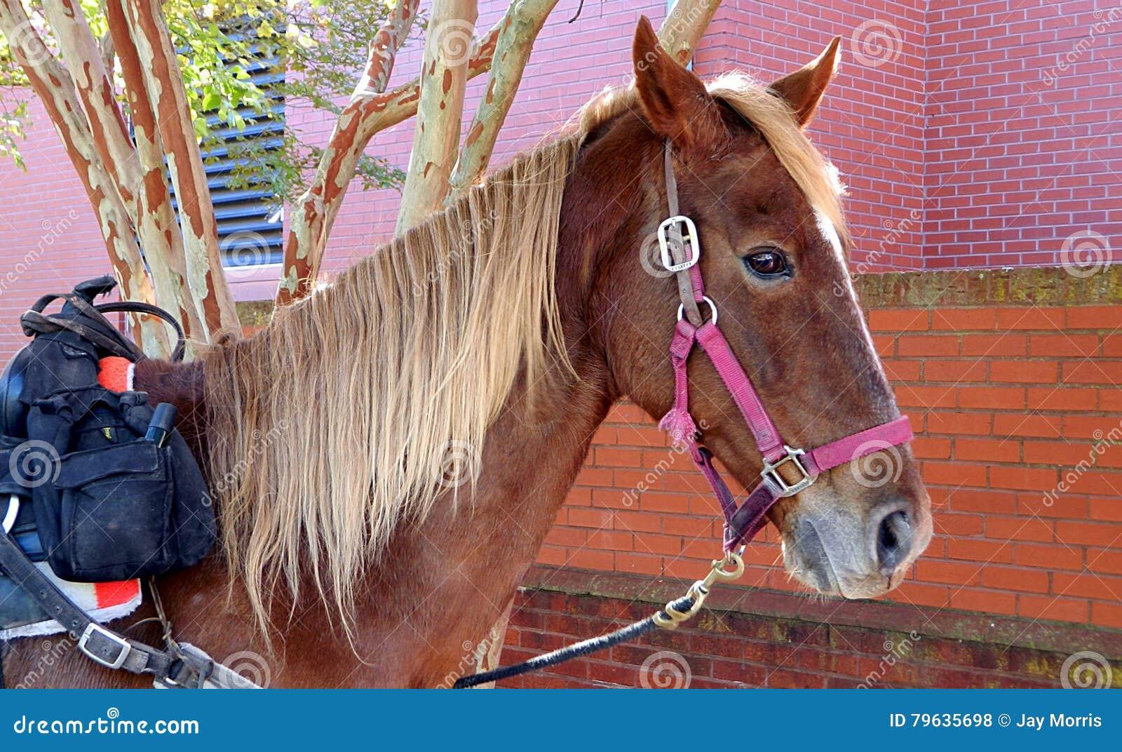 Häst och cowboy på arkivet