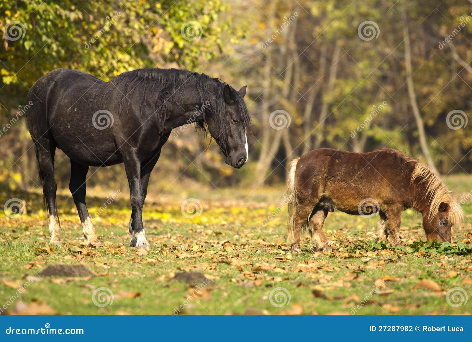 Häst och ponny i gult fält