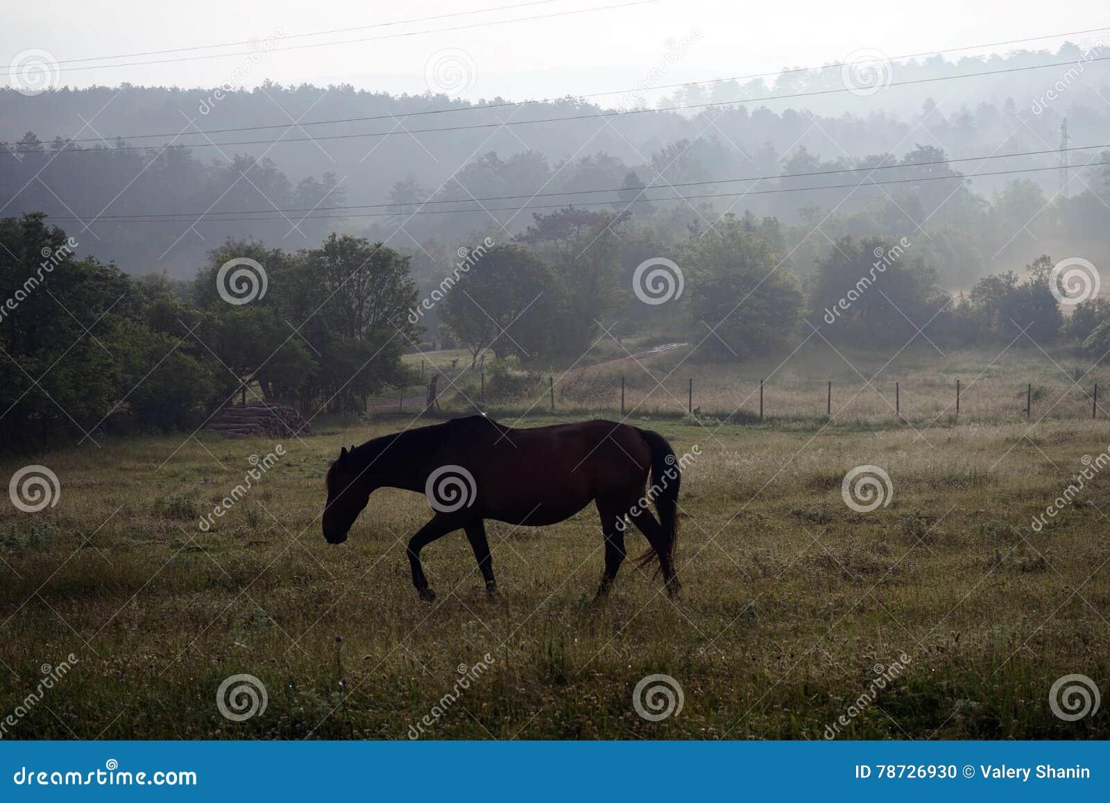 Häst på ängen i dimma