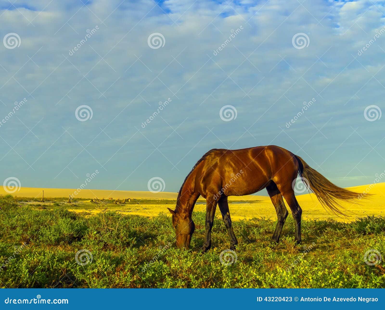 Häst på dyn