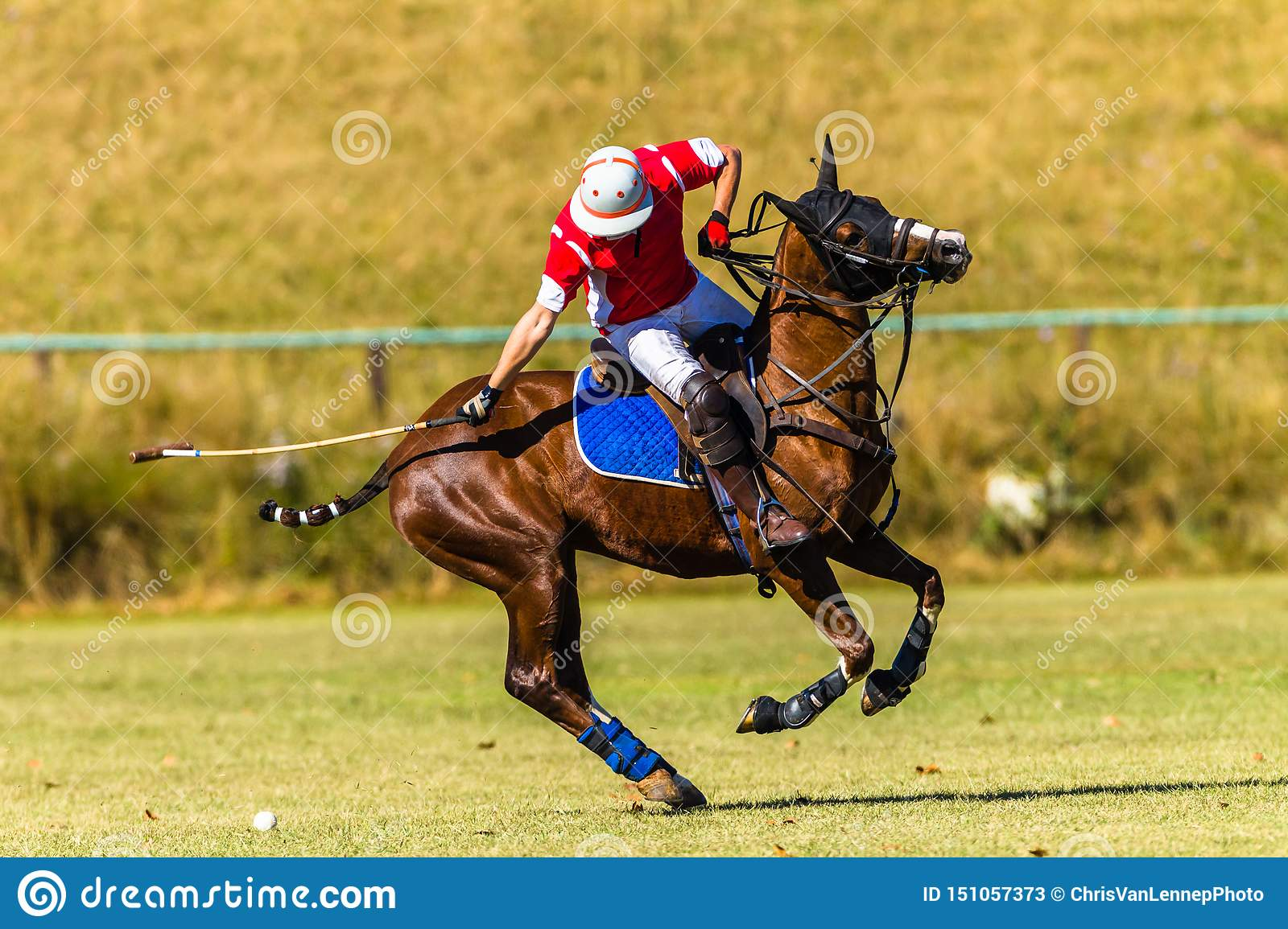 Häst Polo Player Field Game Action