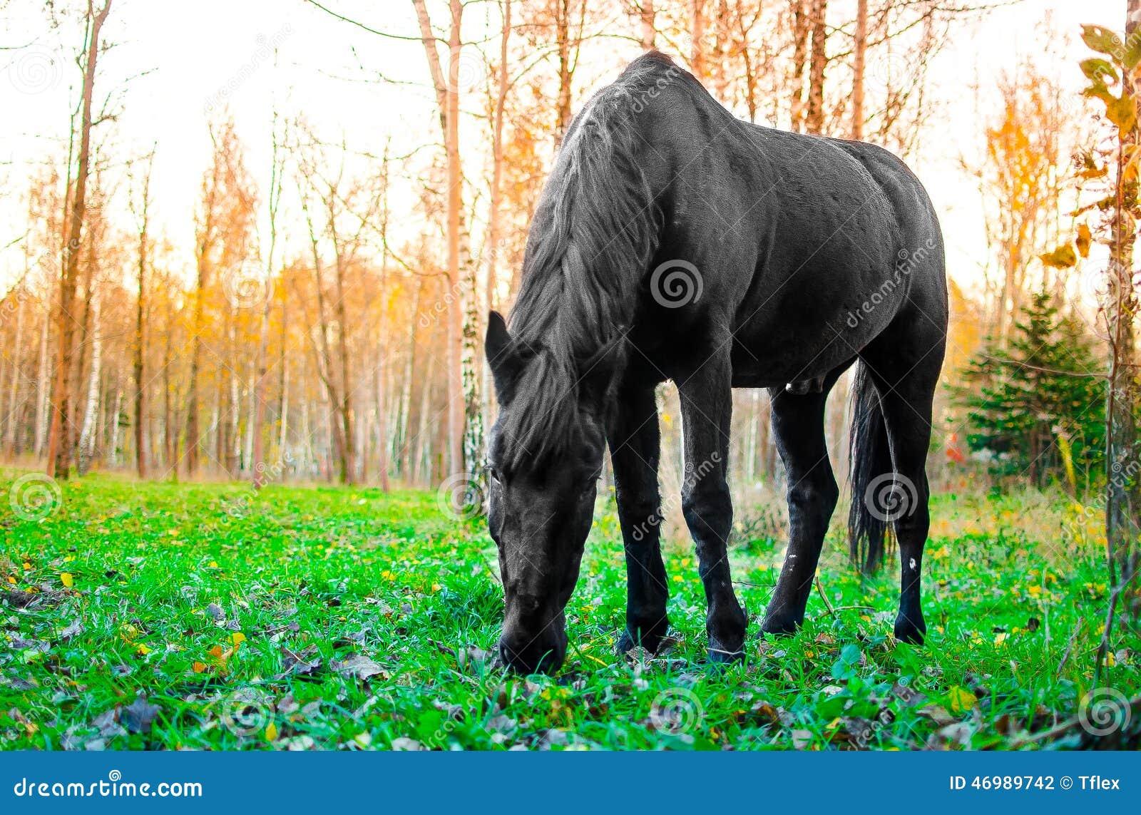 Häst som äter gräs i skogen, grund DOF-fokus på ögon