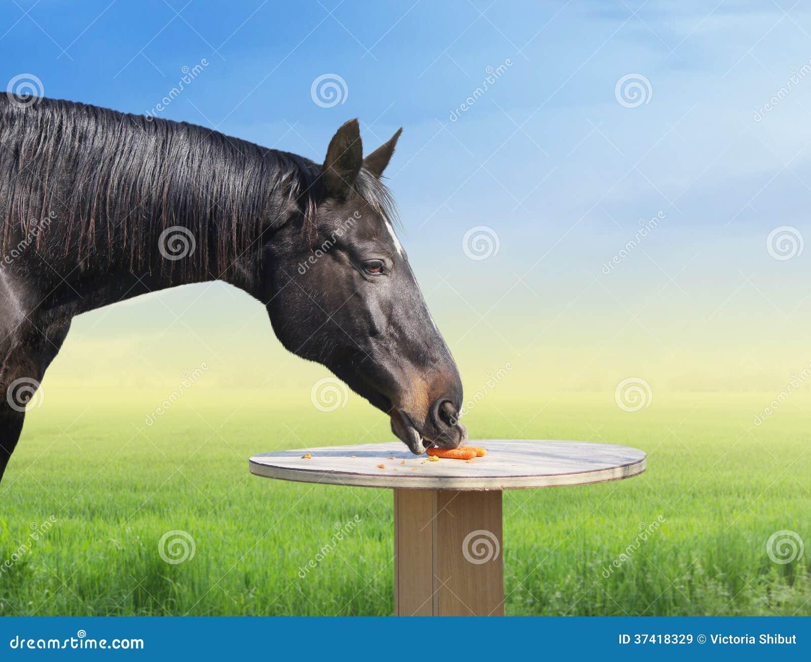 Häst som äter morötter på tabellen