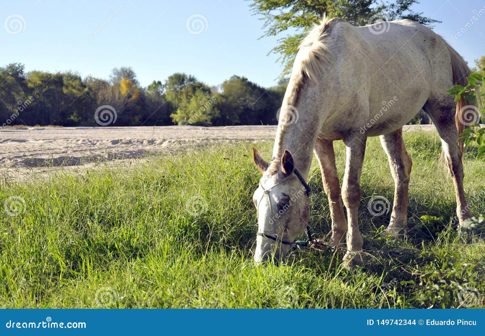 Häst som äter nära floden