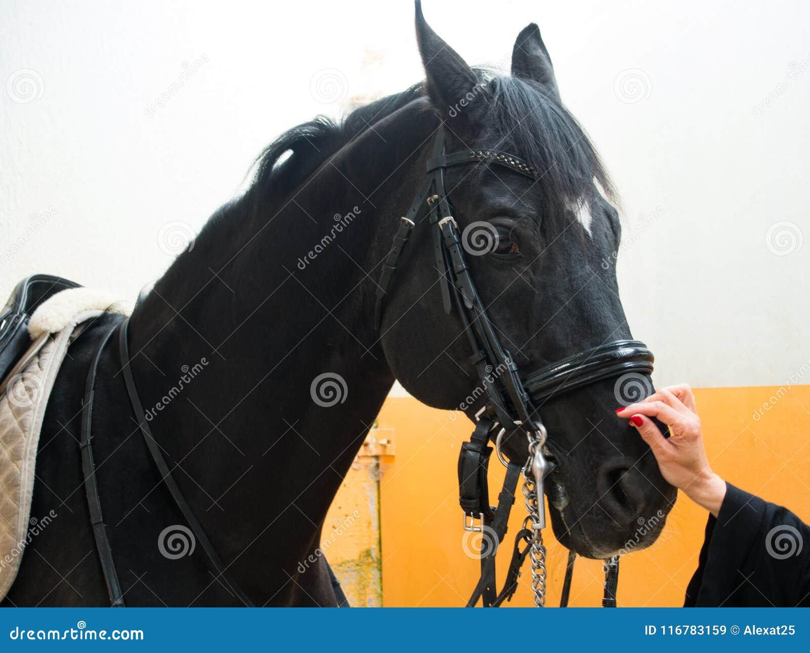Häst som mottar en smekning