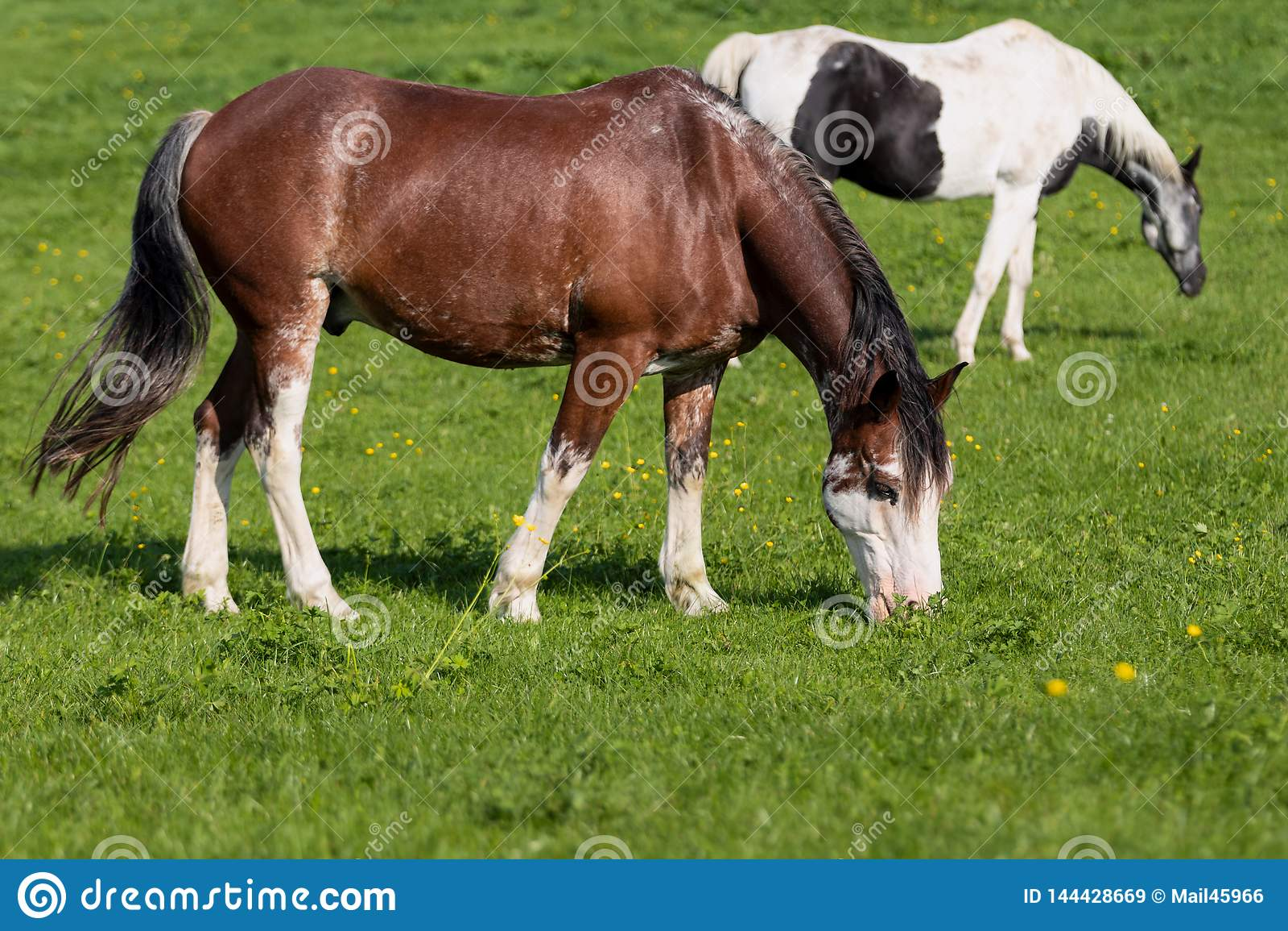2 hästar i en äng
