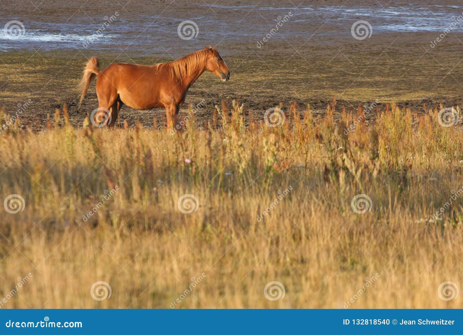 Hästar i ett fält i Sverige i sommaren