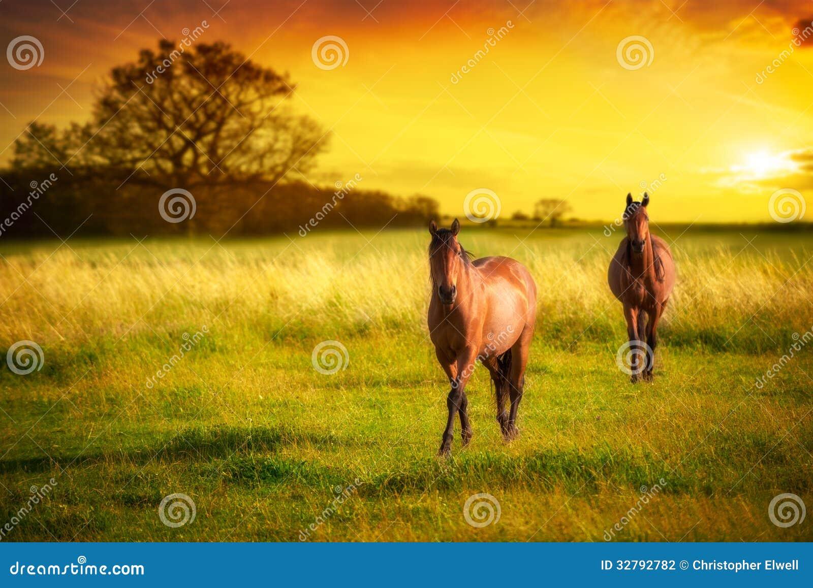 Hästar på solnedgången