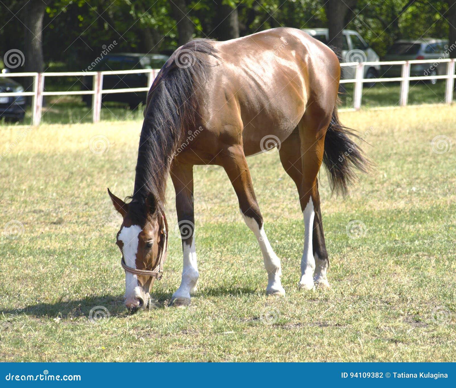Hästen i beta