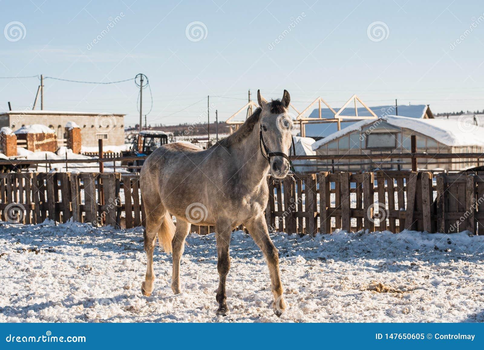 Hästen ser ut bakifrån ett trästaket
