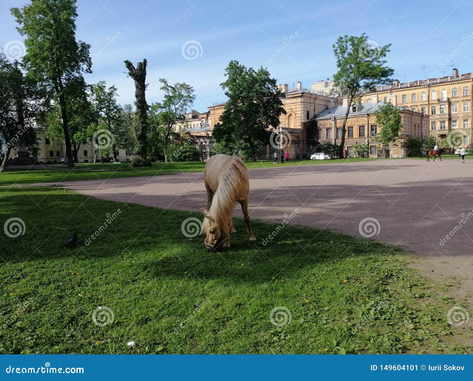 H?sten som betar i, parkerar i Petersburg