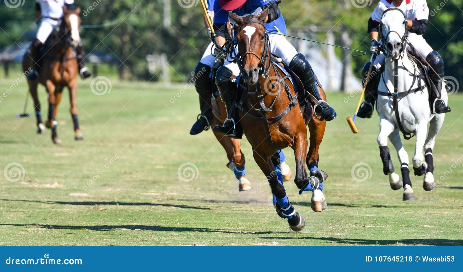 Hästhastighet i polo