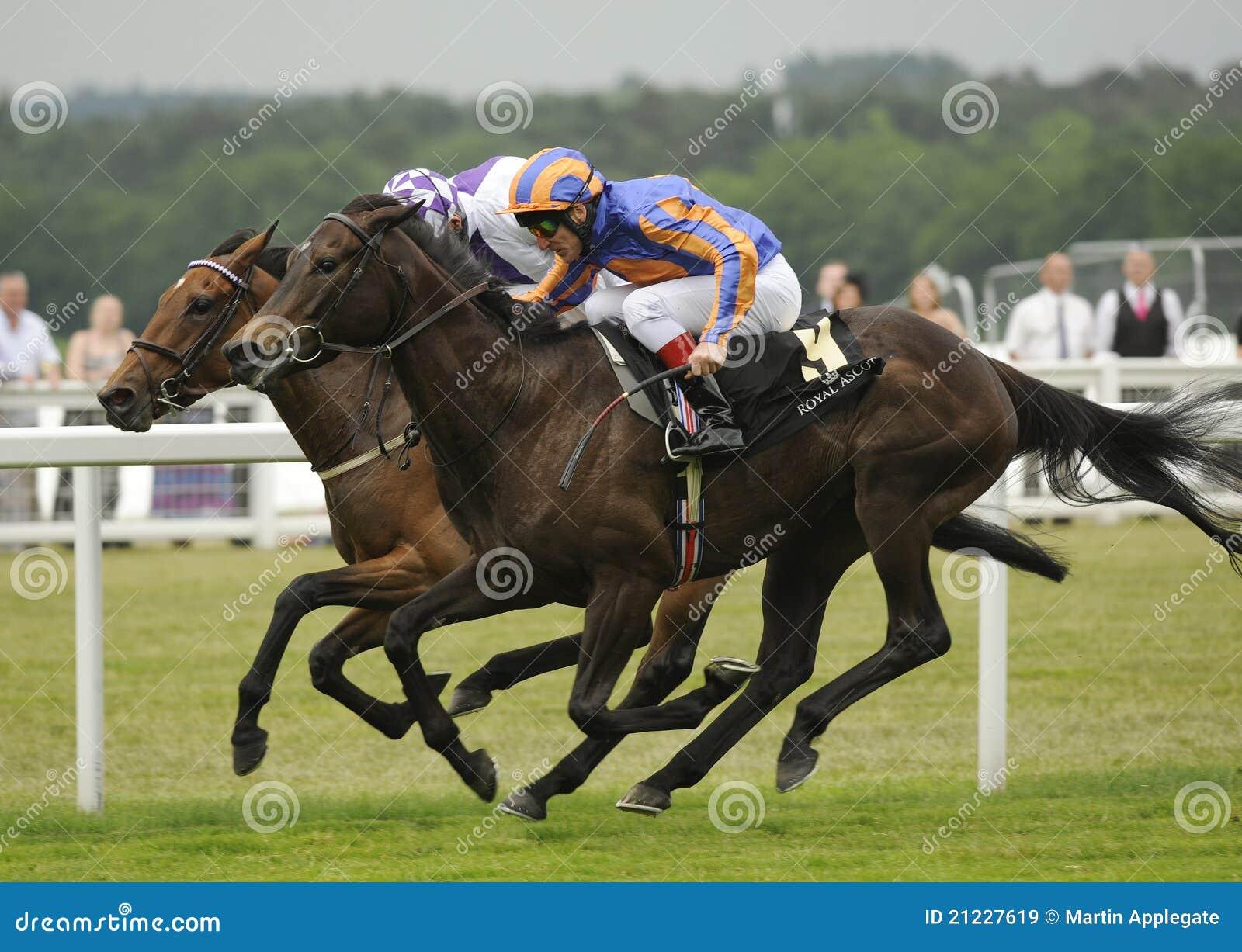 Hästkapplöpning