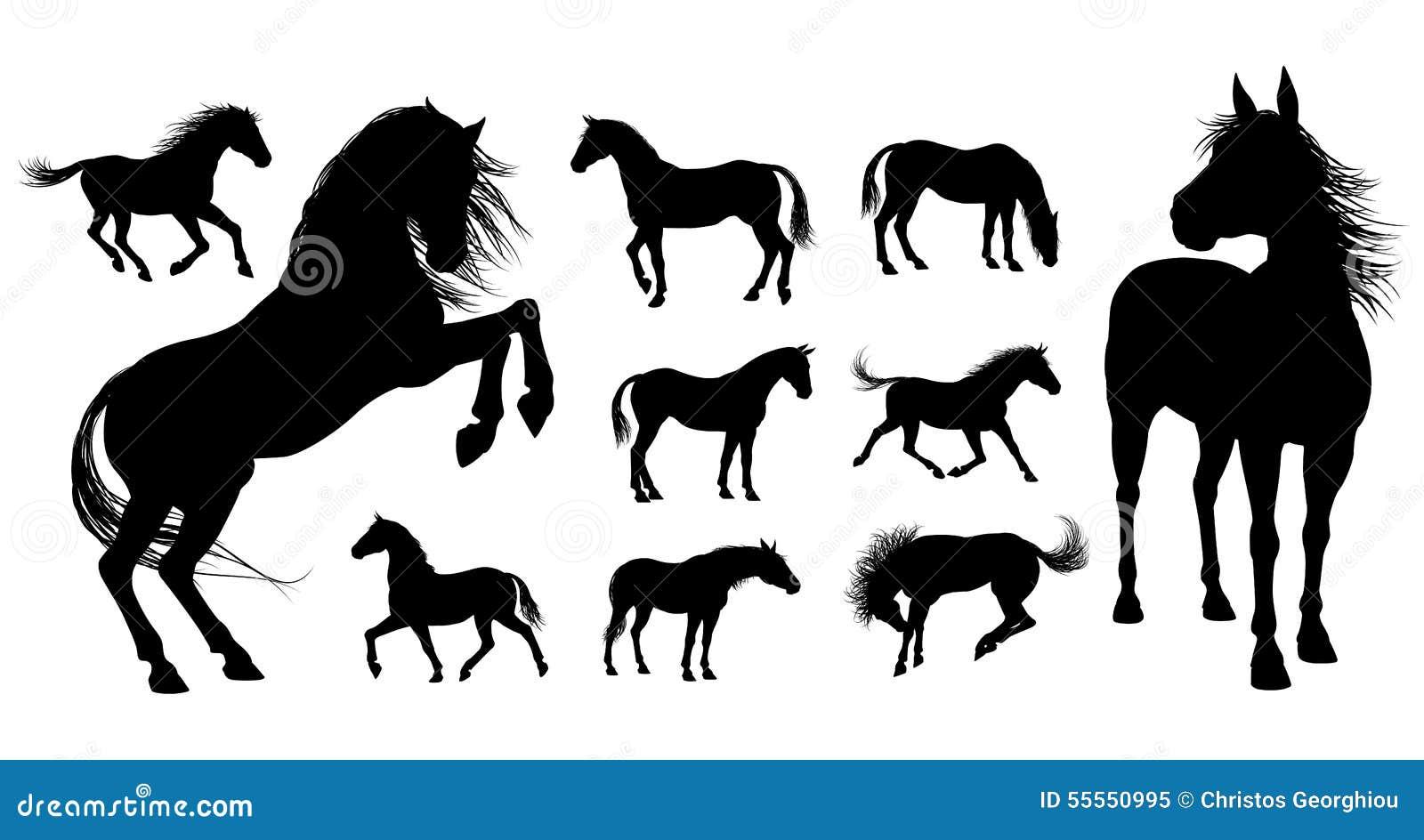 Hästkonturer