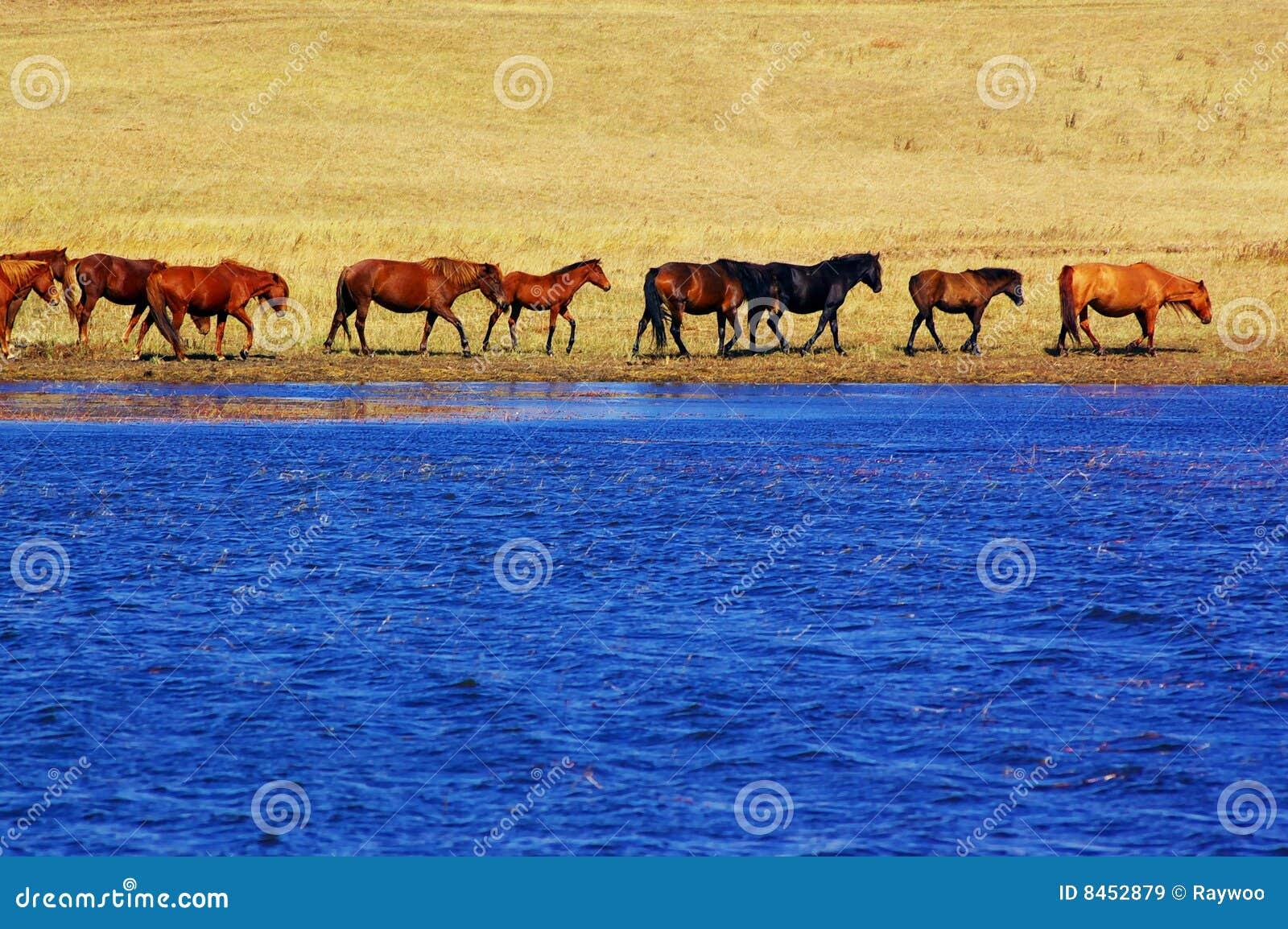 Hästlakeliggande