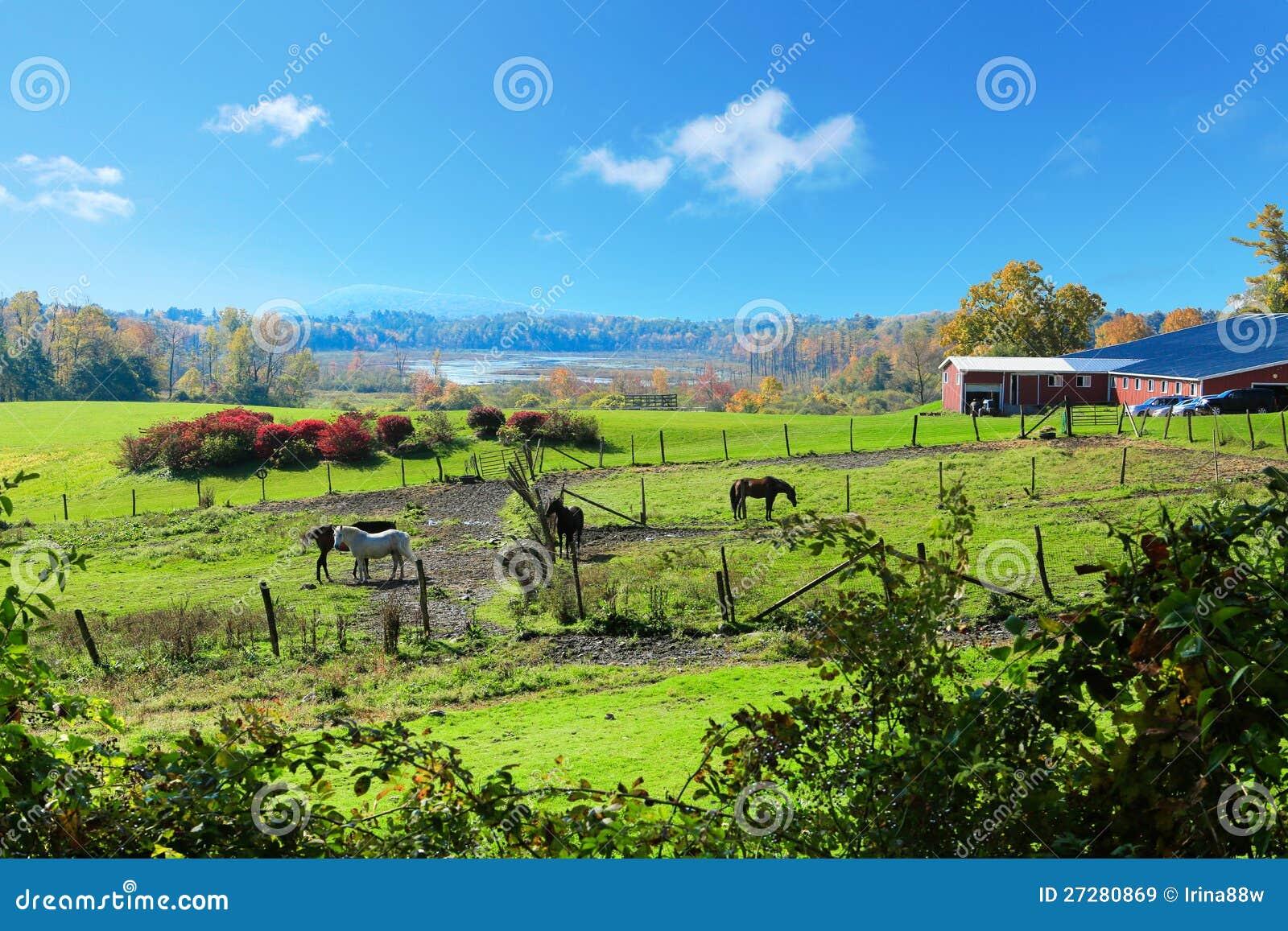Hästlantgårdland med röda ladugårdar under fall.