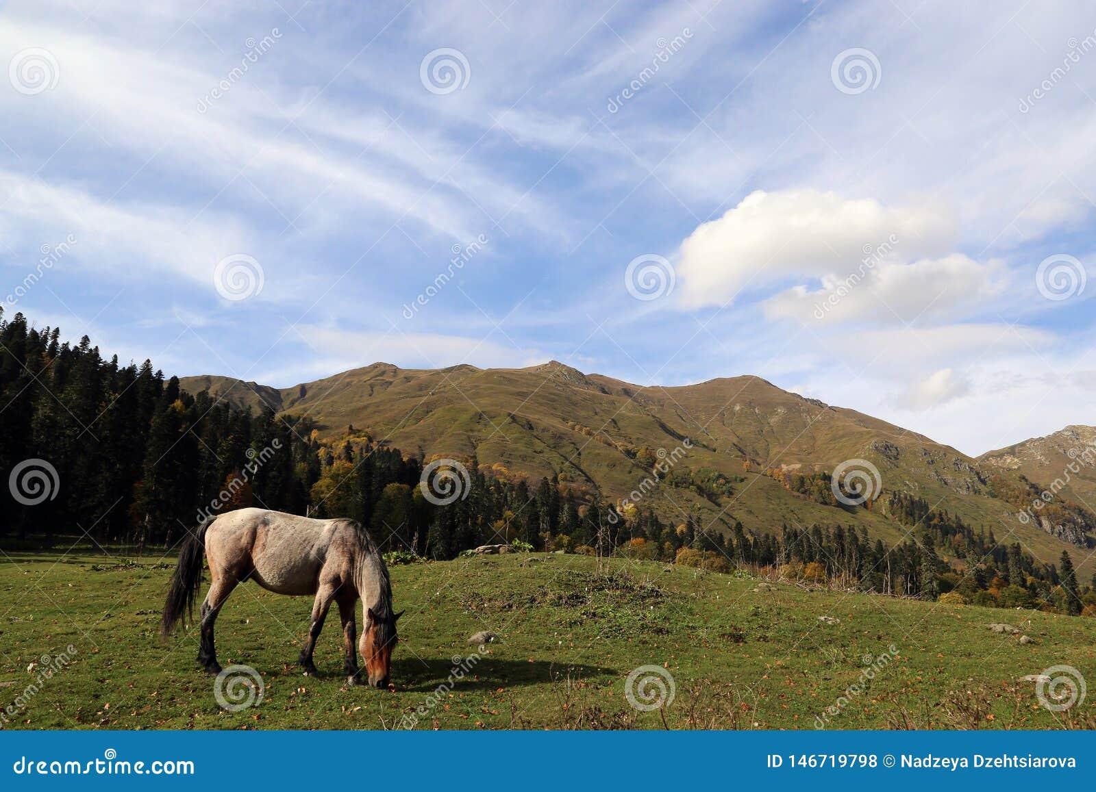 Hästskrubbsår i de höstKaukasus bergen