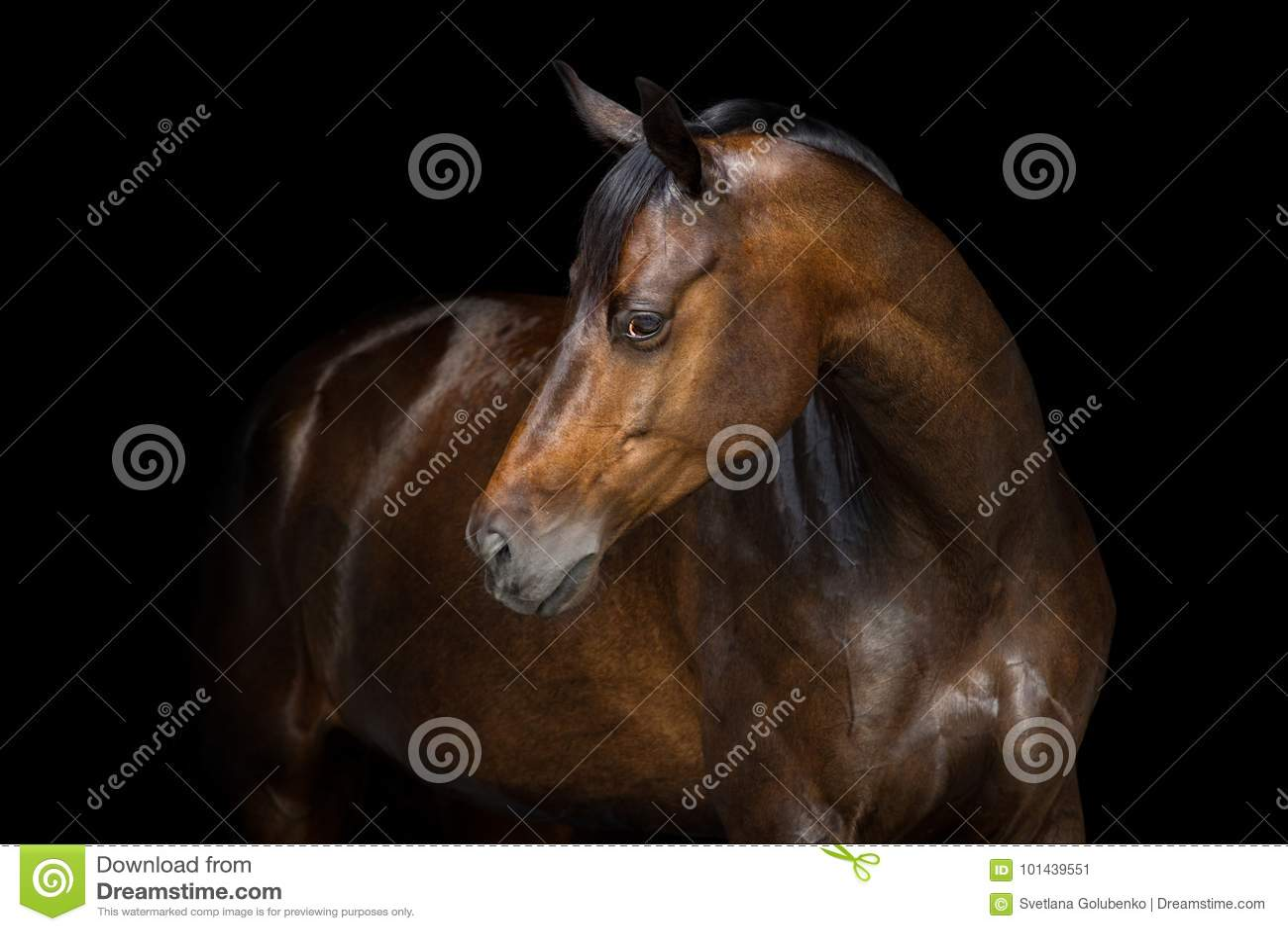 Häststående på svart