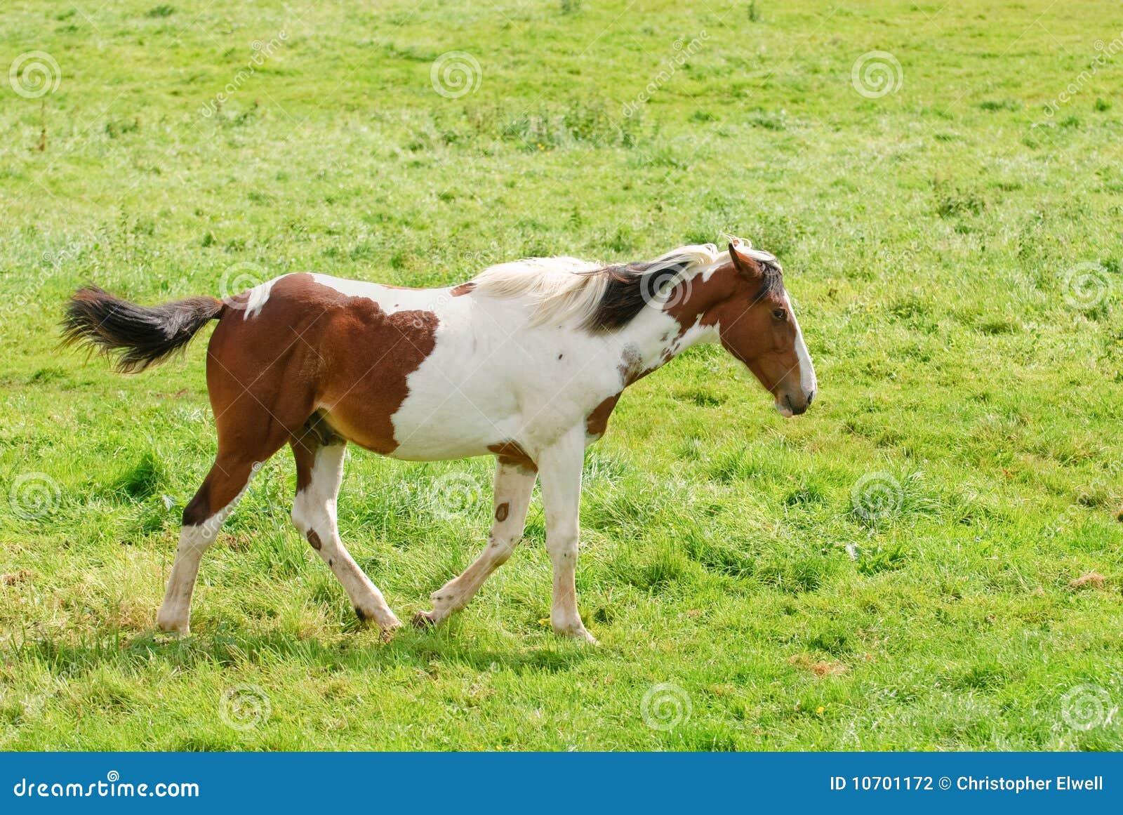 Häststanding
